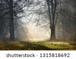 magic mystical foggy forest... | Shutterstock . vector #1315818692