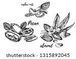 almonds  pecan and cashew nuts... | Shutterstock . vector #1315892045