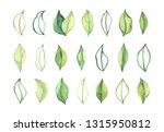 hand drawn watercolor... | Shutterstock . vector #1315950812