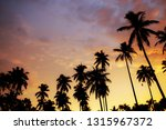 silhouette of palm tree at... | Shutterstock . vector #1315967372