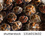 close up of fresh sea urchins | Shutterstock . vector #1316013632