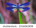 Stock photo beautiful dragonfly dragonflies of thailand 1316062838