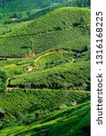 tea plantations near munnar ... | Shutterstock . vector #1316168225
