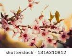 beautiful blooming peach trees... | Shutterstock . vector #1316310812
