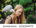 young woman feeding ibes in the ... | Shutterstock . vector #1316344475