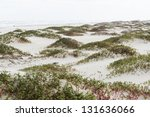 Coastal Dunes Of South Padre...