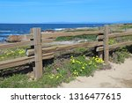 Split Rail Fence And Yellow...