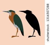 Set Green Heron  Vector...