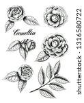 hand drawn camellia flowers.... | Shutterstock . vector #1316580722