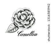hand drawn camellia flowers.... | Shutterstock . vector #1316585942