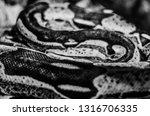 brazilian fauna and flora | Shutterstock . vector #1316706335