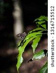 fauna and flora  | Shutterstock . vector #1316715512