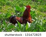 Cock In Between Of Horseradish...