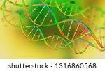 dna. study of gene structure of ... | Shutterstock . vector #1316860568