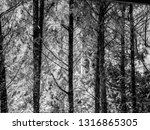 black and white pictures of... | Shutterstock . vector #1316865305