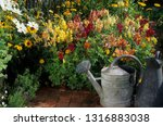 snapdragon in pot in front a... | Shutterstock . vector #1316883038