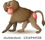 Illustration Of Baboon Isolate...