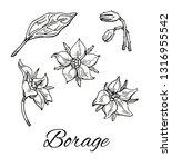 ink borage  borago officinalis  ... | Shutterstock .eps vector #1316955542