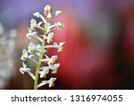 beautiful flower. macro shot of ... | Shutterstock . vector #1316974055