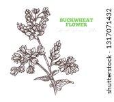 sketch vector buckwheat flower... | Shutterstock .eps vector #1317071432