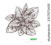 hand drawn vector mint leaves.... | Shutterstock .eps vector #1317071435