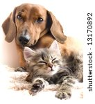 Stock photo cat and dog 13170892