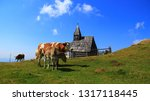 cows on the pasture on a high...   Shutterstock . vector #1317118445