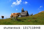 cows on the pasture on a high...   Shutterstock . vector #1317118448