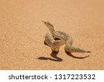 peringuey's adder   bitis... | Shutterstock . vector #1317223532