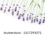 lavender on white background  ... | Shutterstock . vector #1317293372