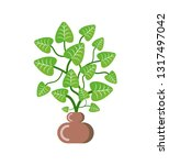 green plant with leaves placed... | Shutterstock .eps vector #1317497042