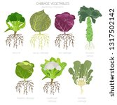 cabbage beneficial features... | Shutterstock .eps vector #1317502142