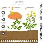 mustard beneficial features... | Shutterstock .eps vector #1317502232