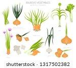 bulbous vegetables  welsh onion ... | Shutterstock .eps vector #1317502382