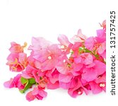 red bougainvillea flower ... | Shutterstock . vector #131757425