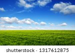 green field and blue sky with... | Shutterstock . vector #1317612875