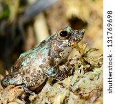 colorful frog in terrarium | Shutterstock . vector #131769698