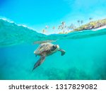 This Green Sea Turtle Is...