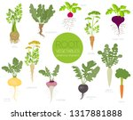 root vegetables raphanus ... | Shutterstock .eps vector #1317881888