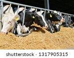 kalush  ukraine   july 11  2016 ...   Shutterstock . vector #1317905315