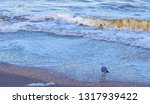 waves on the sea near the shore ... | Shutterstock . vector #1317939422