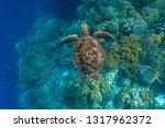 green sea turtle swimming above ... | Shutterstock . vector #1317962372