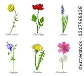 aquilegia flower  dandelion ... | Shutterstock .eps vector #1317968138