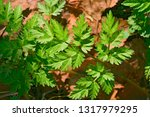 leaves of grass in early spring. | Shutterstock . vector #1317979295