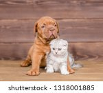 Stock photo mastiff puppy embracing kitten on wooden background empty space for text 1318001885