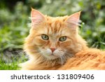 Portrait Of A Beautiful Ginger...