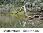 shallow lake with the trunk of... | Shutterstock . vector #1318144532