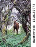 horse in a polylepis forest at... | Shutterstock . vector #1318159775