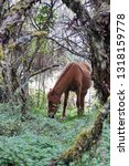 horse in a polylepis forest at... | Shutterstock . vector #1318159778