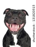Stock photo smiling staffordshire bull terrier dog portrait 131820515